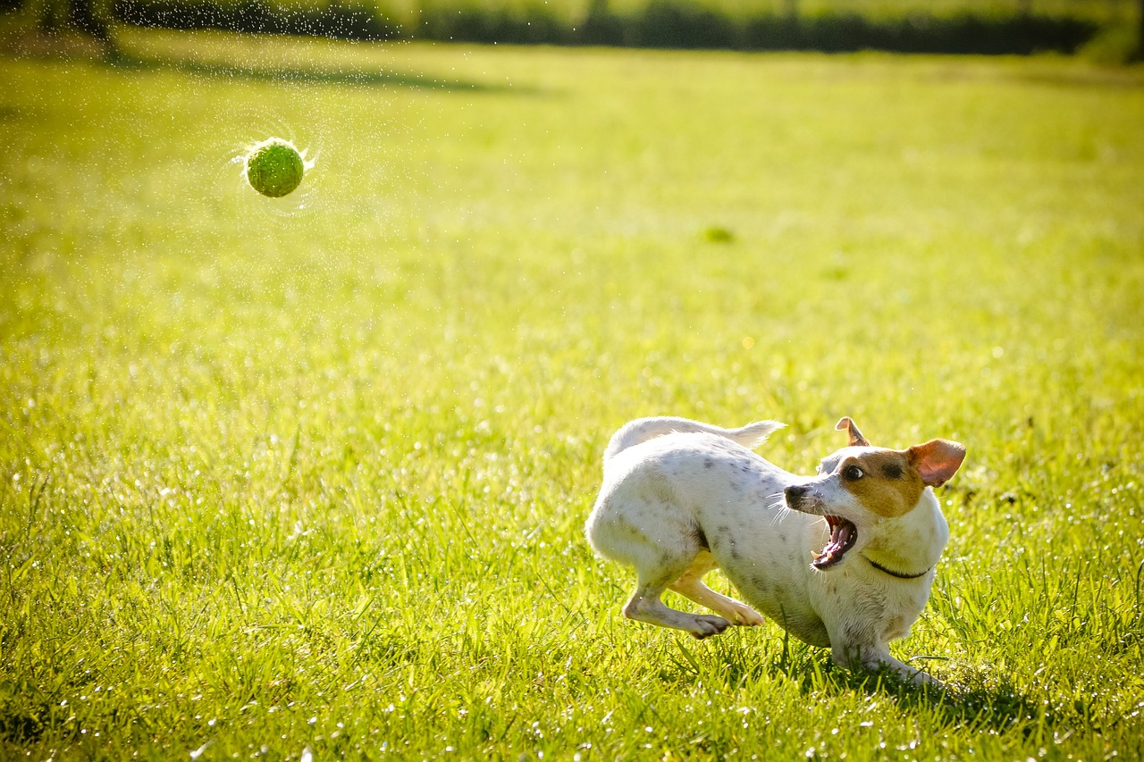 dog-1367297_1280
