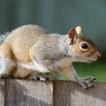 squirrel-1401509_1280 (1)