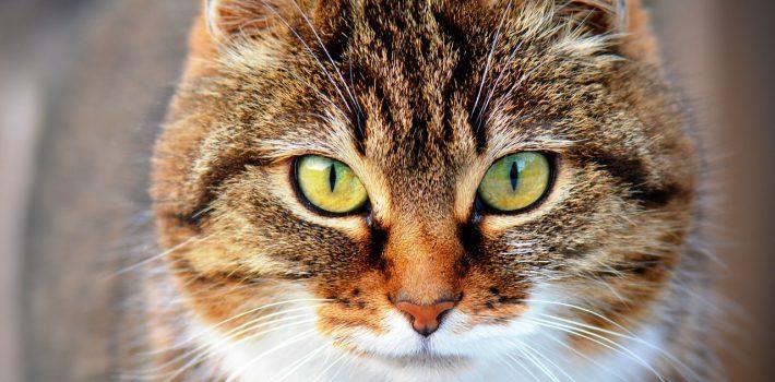 cat-300572_1280