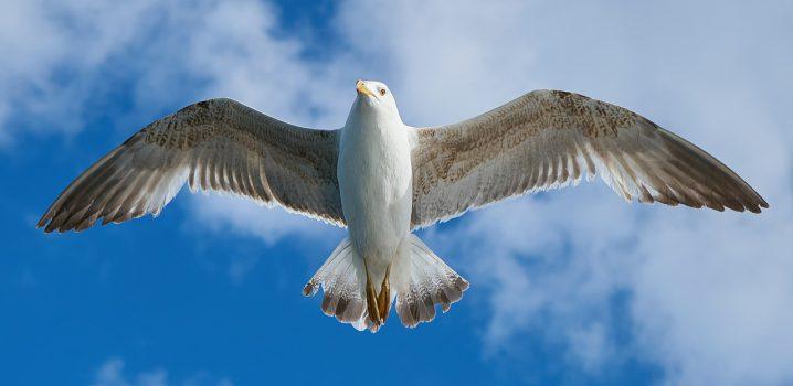 seagull-1511862_1280